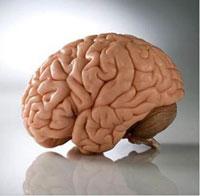 Любовь и биохимия головного мозга