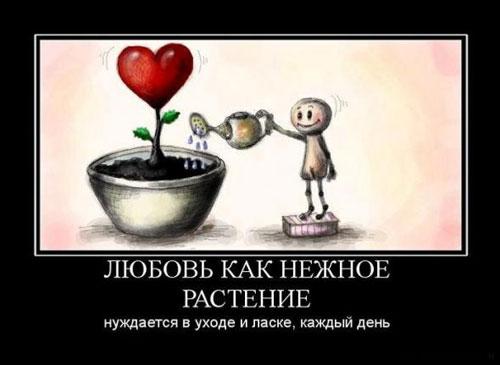 Любовь, как нежное растение, нуждается в уходе и ласке каждый день