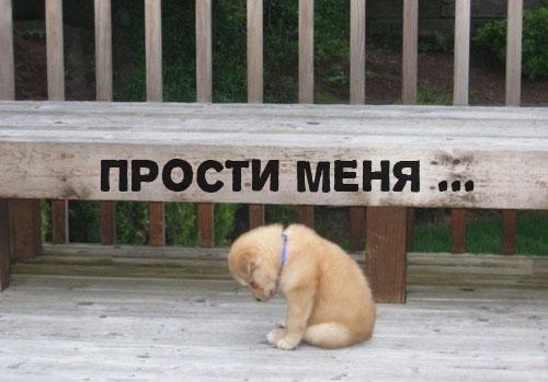 Скамейка, грустный щеночек, прости меня ...