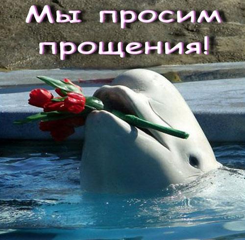Мы просим прощения, дельфин с букетом...