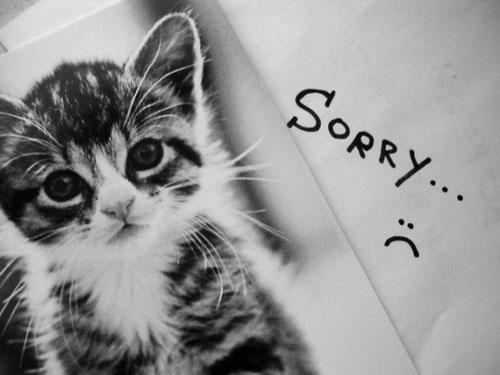 Котенок, прости меня...