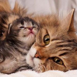 Стихи про кошек, котят, кота