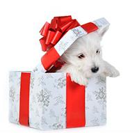 Стихи к подарку щенок, собака, стихи про щенка