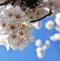 Стихи о весне, весенние стихи