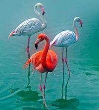 Стихи про фламинго