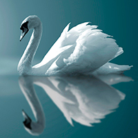 Стихи про лебедя, лебедей