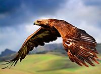 Стихи про орла, орлов