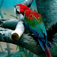 Стихи про попугая