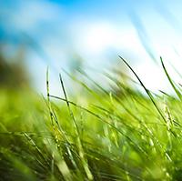Стихи о травах