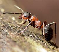 Муравьи появились в вашем доме. Приметы о муравьях