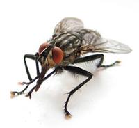 Приметы про муху, мух