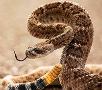 Стихи про змей, змею
