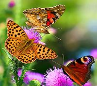 Стихи про бабочек, бабочку