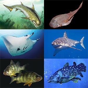 Стихи про рыб, рыбку