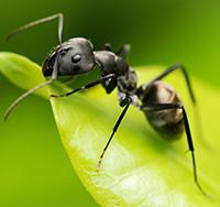 Стихи про муравья, муравьев