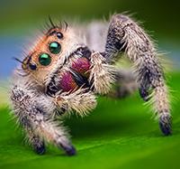 Стихи про паука, паучка, пауков