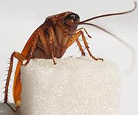 Стихи про таракана, тараканов