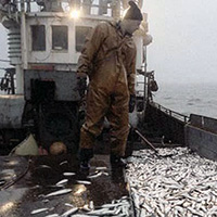 Смешные рассказы о рыбалке