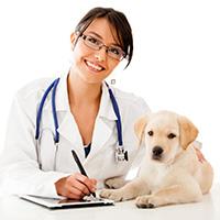 Стихи про ветеринара, ветеринарного врача