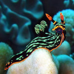 Стихи о моллюсках