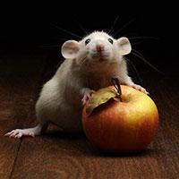 Стихи про мышь