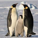 Стихи про пингвинов