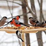 Покормите птиц зимой - стихи
