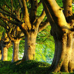 Стихи о деревьях