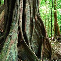 Стихи о эбеновом дереве