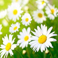 Цветочный рай и фиалки
