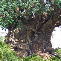 Стихи о железном дереве