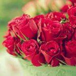 Красные розы — стихи
