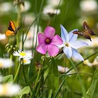 Полевые цветы — стихи