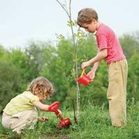 Посади дерево - стихи