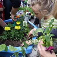 Посади цветок - стихи