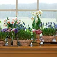 Цветы на окне - стихи