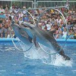 Стихи про дельфинарий