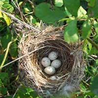 Стихи про гнездо