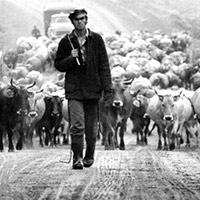 Стихи о пастухе
