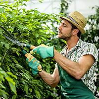Стихи о садовнике