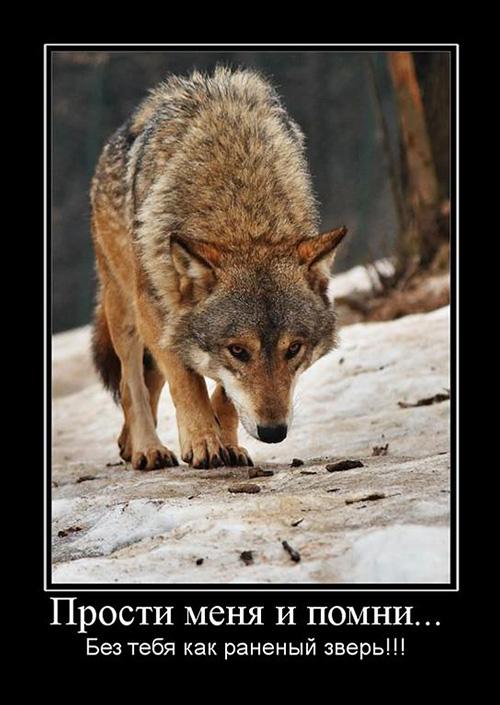 Прости меня и помни... Без тебя как раненый зверь!!!