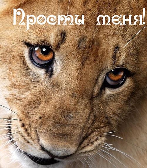 Прости меня... Ласковый львенок.