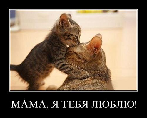 Мама, я тебя люблю! - картинка