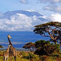 Стихи о Килиманджаро