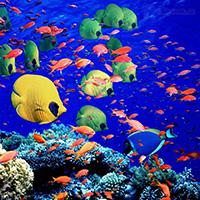 Стихи о Красном море