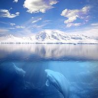 Стихи о Северном Ледовитом океане