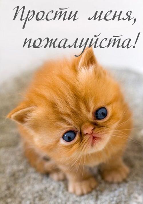 Прости меня, рыжий котенок