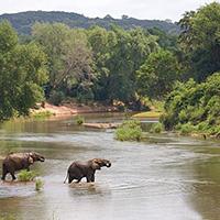 Стихи о реке Лимпопо