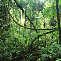 Стихи о джунглях Амазонки