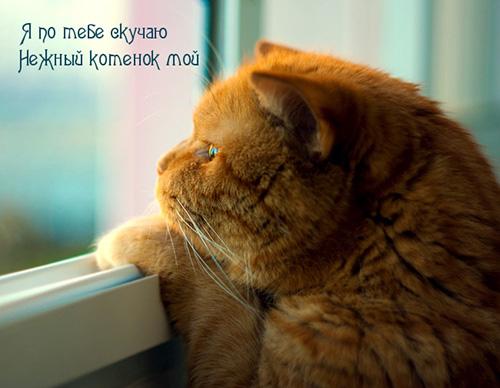 Я по тебе скучаю, нежный котеночек мой